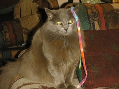 Image04 (Sharron McClellan) Tags: cats kitties whitecat graycat