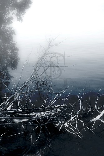 Orillia - Driftwood in Fog, Bass Lake Provincial Park