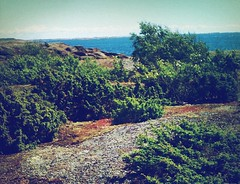 Bushis (TommyVF) Tags: sea mountain tree beach nature water norway stone island bush windy breeze bushes bushis