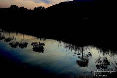 Reflexiones sobre el río[]Reflections on the River[] (yokopakumayoko) Tags: sardegna del italia tramonto fiume valle acqua colori nuoro baronia cedrino irgoli saariysqualitypictures tramontidisardegna valledelcedrino angolidisardegna sunsetinsardinia provdinuoro splendiditramonti puestadesolencerdeña tramontiecolori fiumidisardegna tramontosulfiume