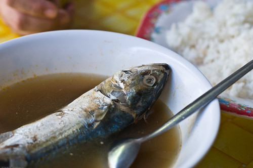 Ikan Singgam