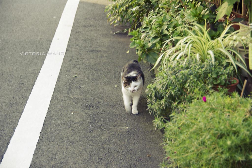 [日本東京に一人で] 根津 猫ちゃん見に行こう!
