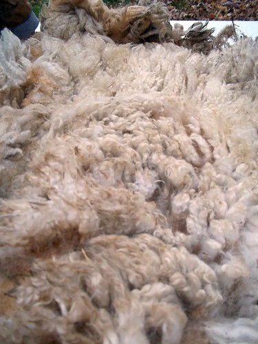 Fleece- good fiber