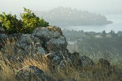 Beginnings of the day... (Rongzoni) Tags: morning light grass fog rocks belvedere tiburon kr2 rm ringmountain