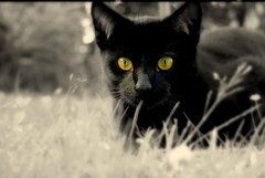 Just  the look (Nicolas Valentin) Tags: black cat scotland chat kittens spike pussycat ourcat bestofcats nicolasvalentin impressedbeauty aplusphoto bestofcat superhearts