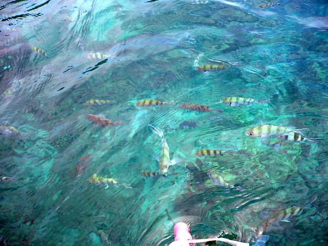 Perhentian Islands Fish