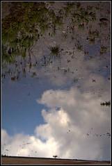 Extraña lluvia - by disgustipado