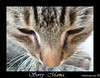 Sorry mama (fringuellina) Tags: pet macro animals sarah cat gatto brava animalplanet animali supershot macrophotosnolimits thebiggestgroupwithonlycats fringuellina mcb1419