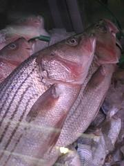 Fish (EMFPhoto) Tags: philadelphia fishhead publicmarket readingmarket
