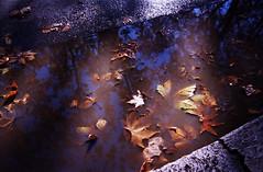 Foglie di platano (map1_) Tags: roma foglie pentax platano trastevere lungotevere autunno mx pozzanghera