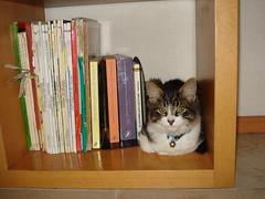 Caruso & my books