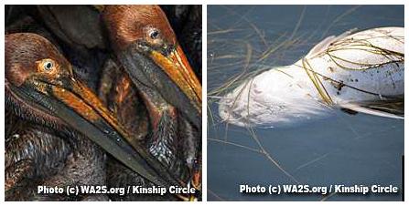 Kinship Circle - 2010-06-21 - 957 Birds Dead - 02