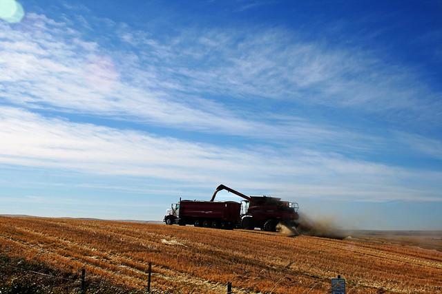 Harvest 2010