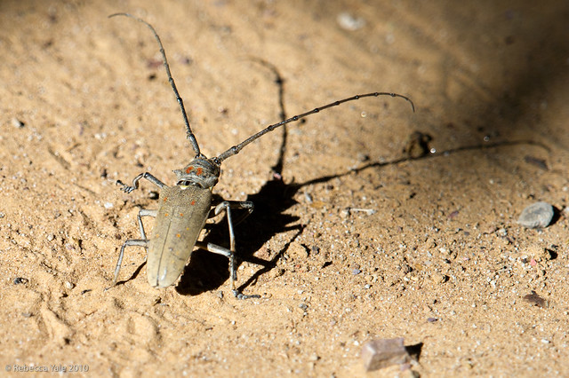 RYALE_Ranthambore_Insect_4