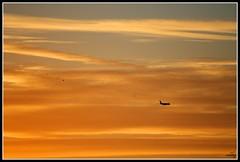Siguiendo al lder (encaso) Tags: sunset valencia plane airplane atardecer seagull bigbrother gaviota avion followtheleader