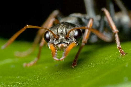 Ant headshot.