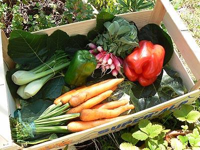 petits légumes du marché ....jpg