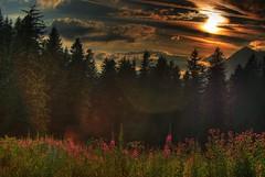 Sunset (mabufeu) Tags: flowers trees sunset red orange mountain nature clouds forest landscape switzerland hdr saanenland blueribbonwinner 5xp vaudoise lacretaud pentaxk10d