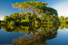 Reflecting on Yacuma River (Marc Shandro) Tags: trees reflection southamerica water river bolivia jungle pampas abw themoulinrouge supershot worldbest aplusphoto treesubject thegoldenmermaid bachspicsgallery balatours