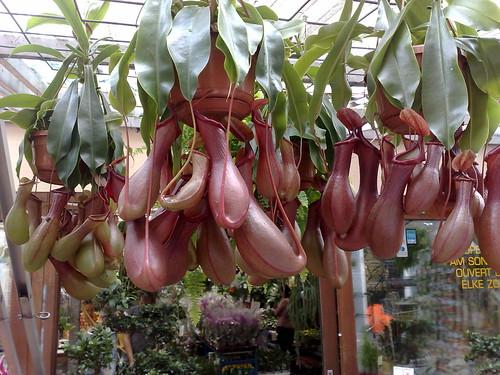 Plantas carnivoras en Amsterdam