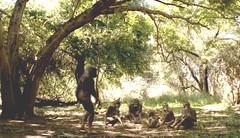 007 05 australopithecus family