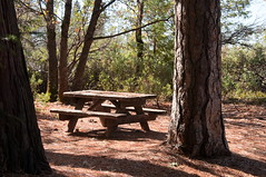 Picnic Area Photo