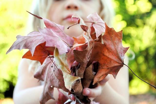 a handful of leaves