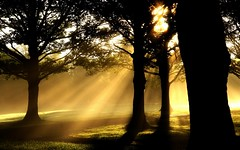Morning sunbeams dancing with the trees (algo) Tags: trees england sunshine topv111 interestingness topf50 topv333 bravo silhouettes explore rays avenue algo topf100 frontpage sunbeams 100f halton 50f outstandingshots explore25 infinestyle searchthebestnew
