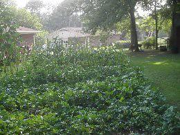 garden pictures thurs 006