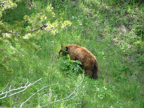 另外一隻灰熊寶寶要回家了