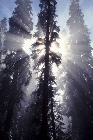 'shining_treetops' by Zest-pk