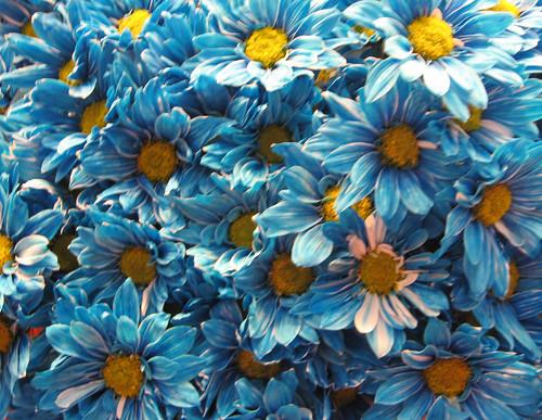 blue flowers bouquet. A ouquet of lue flowers. Explore #414 8-4-07