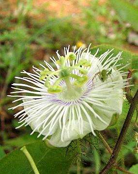 un id flower 180807