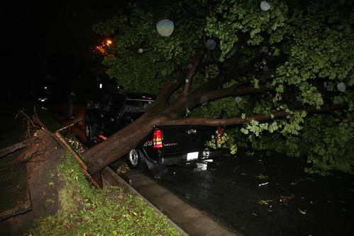 tree on truck.jpg