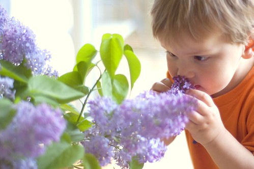 458:1000 Lucas and the lilacs 1 of 4