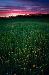 Springbrook Sunset (baldwinm16) Tags: sunset nature reflections illinois spring may wildflowers prairie dupagecountyforestpreserve illinoisforestpreserve springbrookprairieforestpreserve