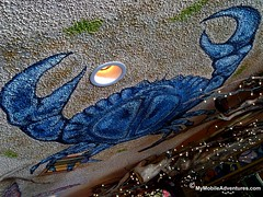06132010988-Sanibel-McTs-crab