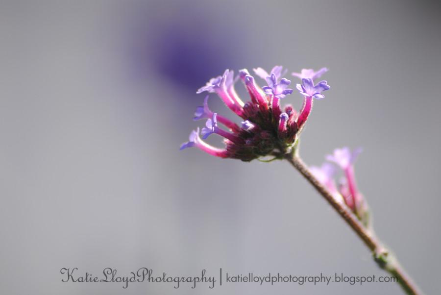 PurpleFlowers-sooc