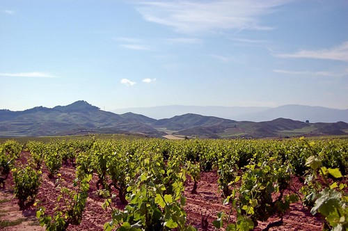 Vineyards in Rioja by col.hou, on Flickr