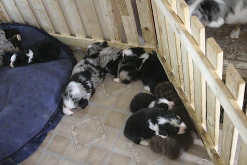 Puppy Bin