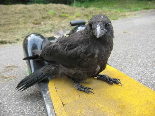 Crow interested in my longboard in Mannheim, Germany