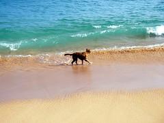 等衝浪的狗