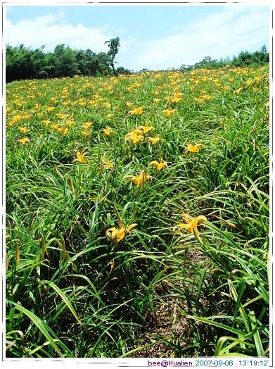 花蓮賞美麗的金針花在赤科山 (19)