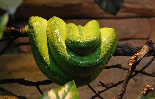 Snake at Skansen Aquarium