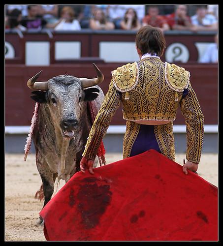 Vencejo, de Torres Gallego
