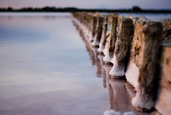 50mm endless ((davide)) Tags: sardegna reflection water nikon sardinia bokeh d200 nikkor davide saline serie cagliari 50mmf14 dcassaa