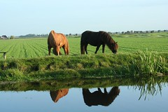 netherlands 040
