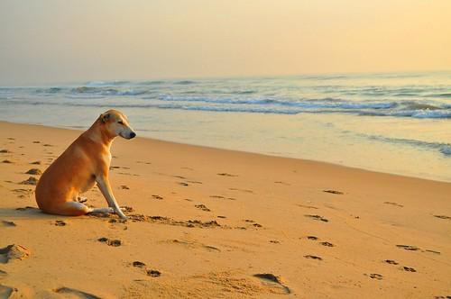 tratamiento de cancer en perros