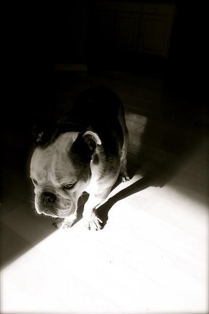 dog in morning light