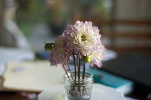dahlias, jam jar